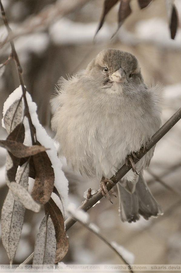 Fat birdie