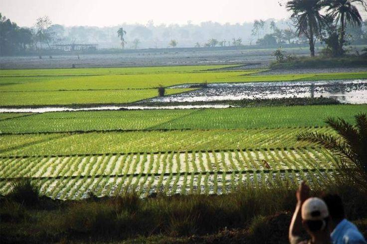 Adoption of low carbon agriculture techniques