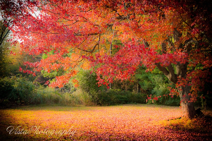 My July print winner picked this image as her favorite!  maple in red and orange