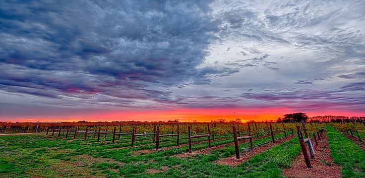 Coonawarra Sunrise by Pieter Pretorius on 500px