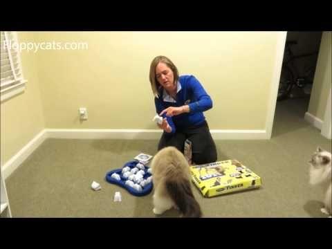 Ragdoll Cats Receive Nina Ottosson Dog Finder Cat Puzzle Toy - ねこ - ラグドール - Floppycatshttp://youtu.be/bg7IVYbwTKg