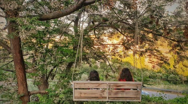 Photography Palestine Sisters أخوات فلسطين خلفيات أرجوحة Swing Sunset 16 5 19 Tree Tree Trunk Plants
