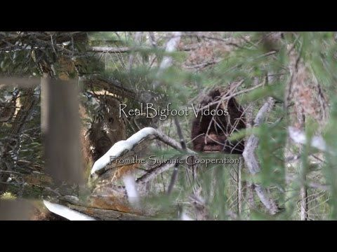 Sylvanic Bigfoot Documentary. The first 10 minutes with new Sasquatch stills - YouTube a lot of people believe Todds a fake but I'm not so sure.