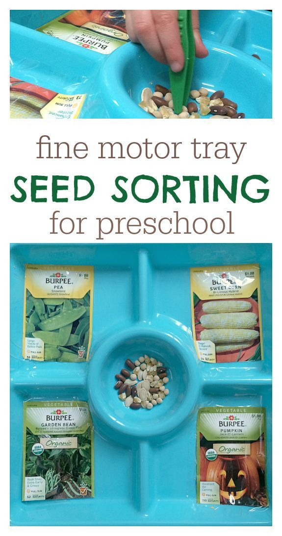 Seed sorting activity for garden or vegetable week at preschool.