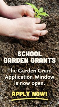 Whole Kids Foundation is currently accepting applications for 2013-2014 School Garden Grants