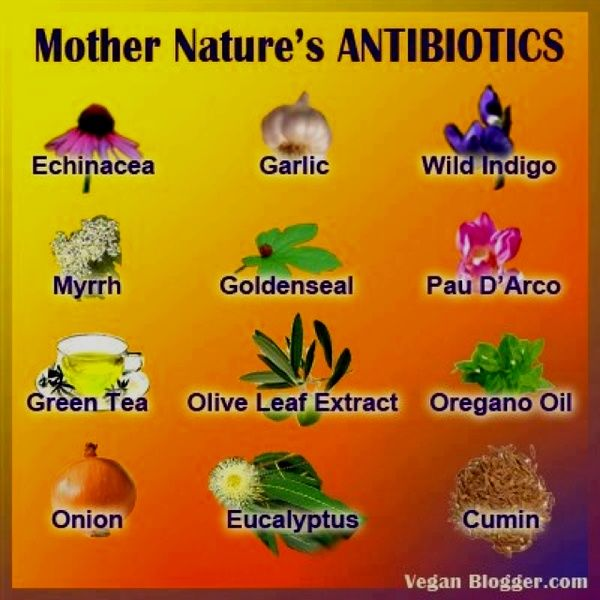 these are some other amazing examples of natural antibiotics:        Echinacea - Garlic - Wild Indigo - Myrrh - Goldenseal - Pau D'Arco - Green Tea - Olive Leaf Extract - Oregano Oil - Onion - Eucalyptus - Cumin