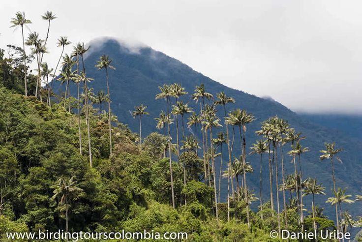 Nosotros tomamos fotos a Colombia.