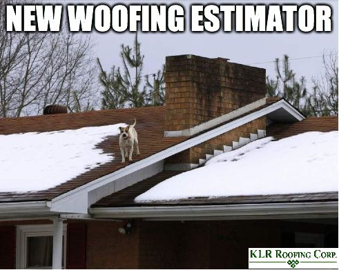 Beautiful Roofing Meme Joke Dog On Roof