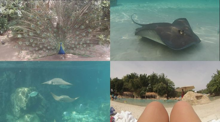 Discovery Cove Vlog 2016!! #swimmingwithsharks #discoverycove #adventure #dolphins #seaworld #vlog #youtube #beauty #fashion #howto