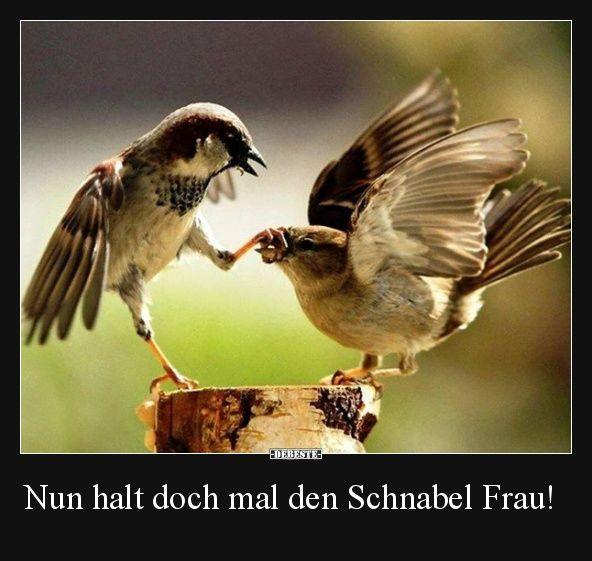 Bildergebnis für vogelbilder lustig