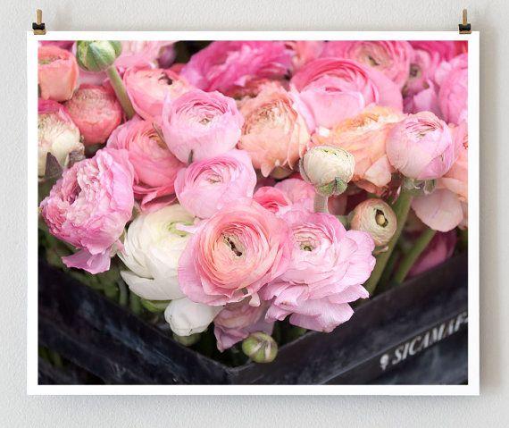 Pink Flowers Paris Ranunculus Photo Art Print by littlebrownpen, $30.00