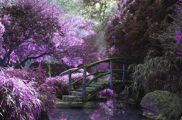 The Garden Of Violets By Graal Publishing In 2021 Landscape Magical Pictures Tree Art