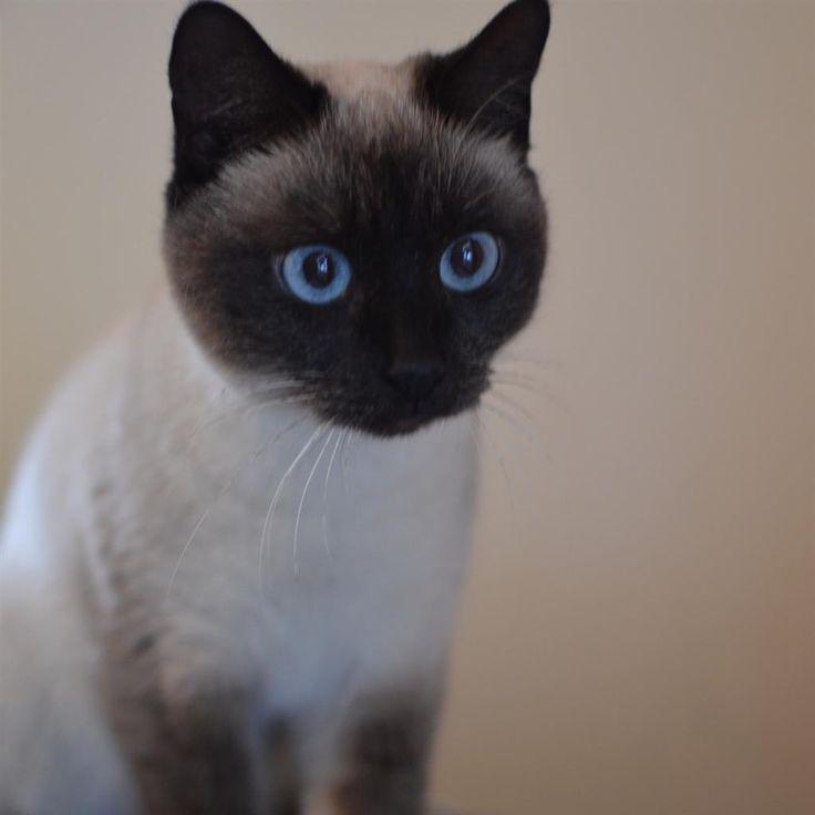 Female Manx Cat Names