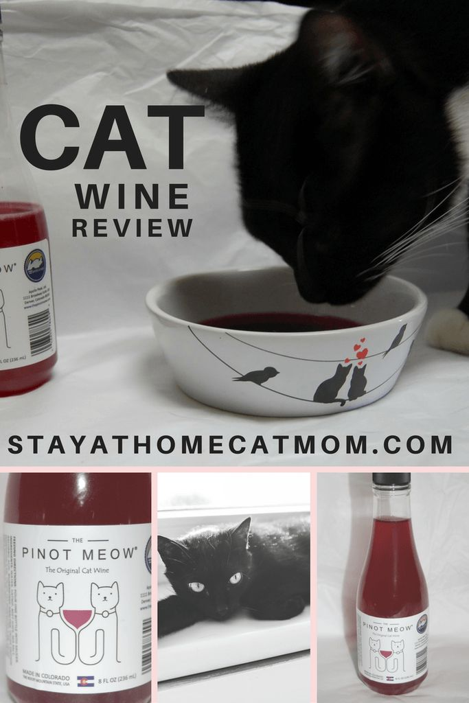 Apollo Peak Cat Wines Review - Stay At Home Cat Mom reviews a cat wine!