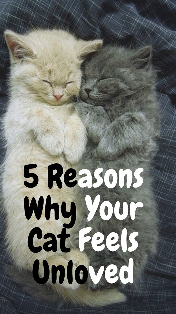 5 Reasons Why Your Cat Feels Unloved Cats Cat Care Cat Behavior