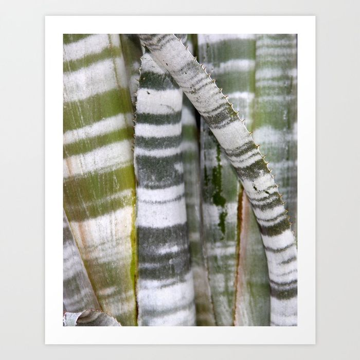 Buy Cactus - striped Art Print by agnessalifits. Worldwide shipping available at Society6.com. Just one of millions of high quality products available.