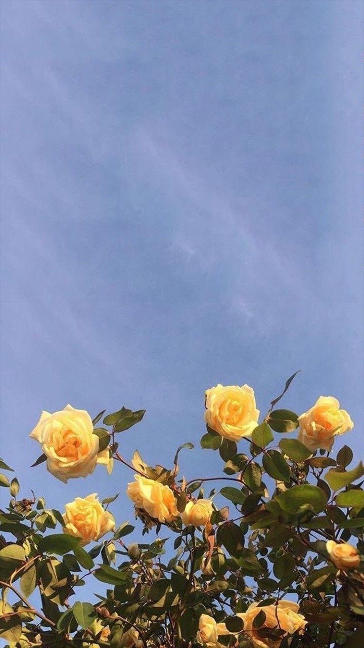 Flores fondo