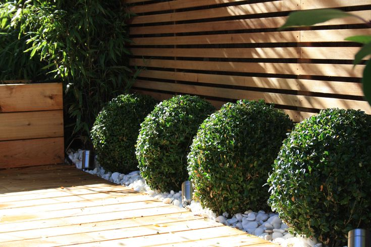 Round scrubs against contrasting linear fence