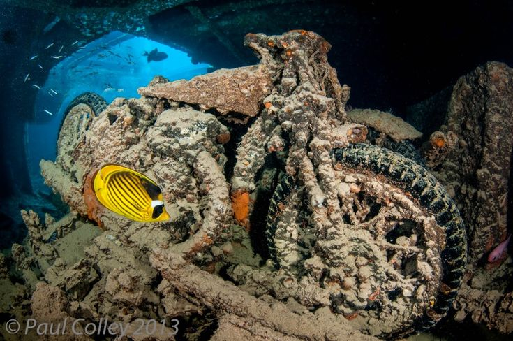 17 Best Images About Underwater Treasures On Pinterest