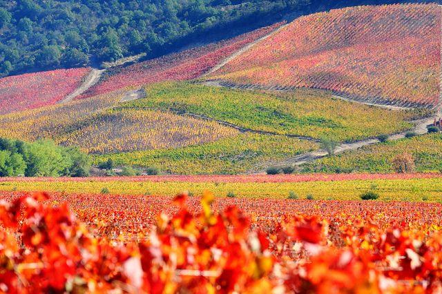 Lapostolle Apalta Vineyard in Santa Cruz - Colchagua Valley, Chile…
