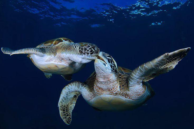 Tartaruga marinha                                                                                                                                                                                 Mais