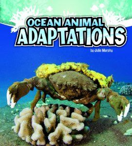 Ocean Animal Adaptations (Amazing Animal Adaptations): Julie Murphy: 9781429670296: Amazon.com: Books