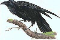 Caffè Letterari: Perchè i corvi sono neri?