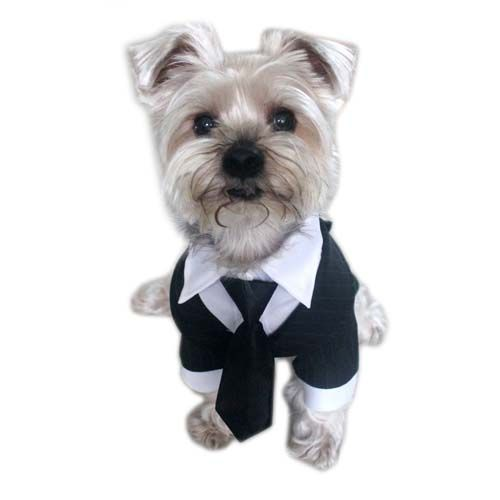 Top 10 Best Dog Costumes in 2015 | Top Dog Tips