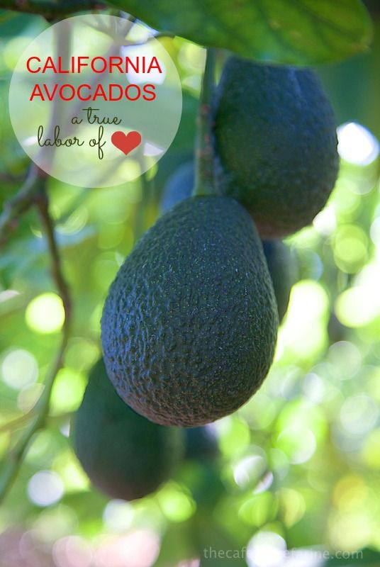 California Avocados are amazing and grown with tender loving care. - thecafesucrefarine.com