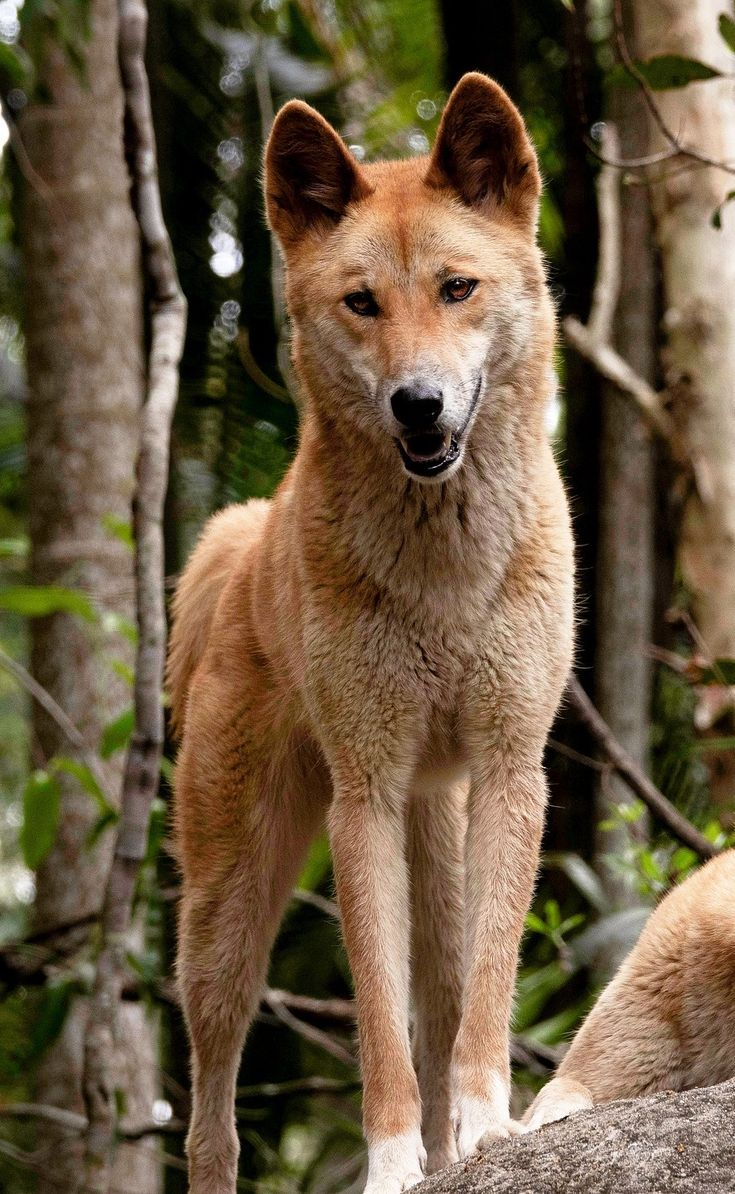 13+ Wild animals in australia ideas in 2021