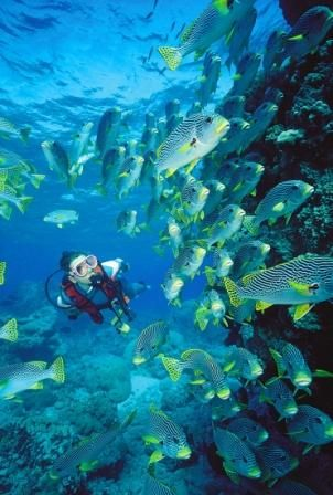 Learn and go Scuba Diving..