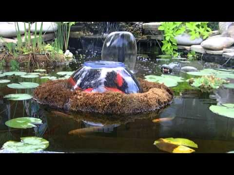 20 best images about fish observatory on pinterest for Goldfish pond ideas