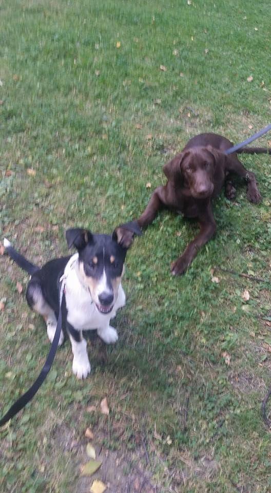 Leevi ja kaverin koira Kamu. :)