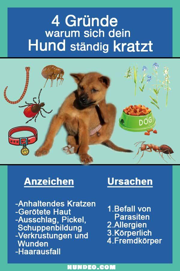 Hund Kratzt Sich Standig 4 Grunde Und Was Dagegen Hilft Hunde Hund Juckreiz Hundehaltung