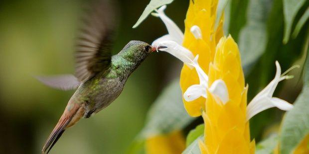 Avistamiento de aves y paisajes cafeteros, ocio verde en Colombia. EFE/Ricardo Maldonado R.