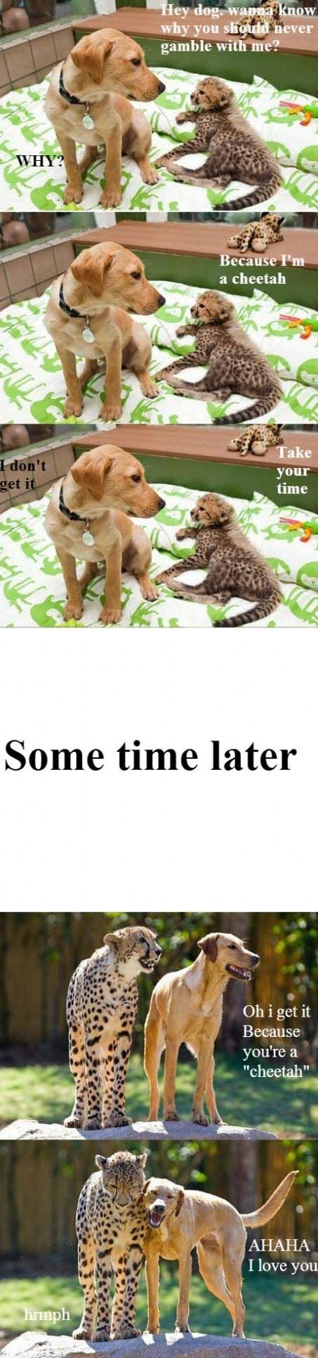 Cheetahs Are Quicker Than Dogs