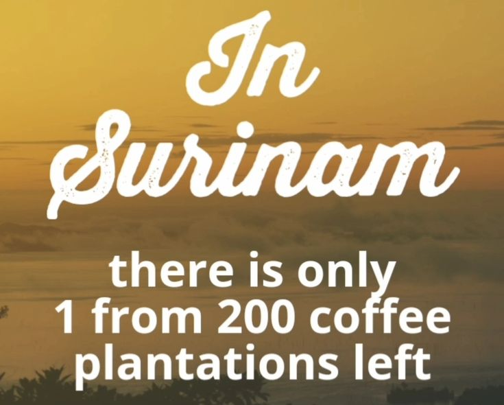 💡🌱☕In Surinam there is only 1 from 200 coffee plantations Left. 👉 Why and more about the #coffee History in #Surinam #onmyblog  http://bunaa.de/en/surinam-2/💡🌱☕In Surinam gibt es nur noch 1 von 200 #Kaffee Plantagen. 👉 Warum das so ist und mehr zur Geschichte des Kaffees in #Surinam http://bunaa.de/de/surinam/💡🌱☕In Surinam gibt es nur noch 1 von 200 #Kaffee Plantagen. 👉 Warum das so ist und mehr zur Geschichte des Kaffees in #Surinam http://bunaa.de/de/surinam/