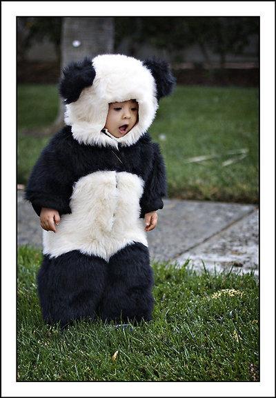 : Pandas Baby, Baby Pandas, Halloween Costumes, So Cute, Pandas Bears, Asian Baby, Future Kids, Panda Costumes, Pandas Costumes