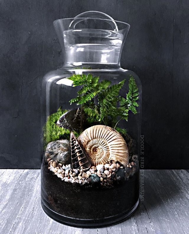 """A recent piece I did for a customer - on display is a large 4"""" ammonite fossil inside a terrarium with fresh moss and ferns. I finished it off with a small laser cut seashell and multicolored rock. (More designs can be seen via the link in my bio section) #moss #ferns #fossils #ammonite #terrarium #prehistoric #mossterrarium"""