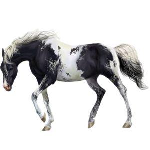 Sadness, Pferd Paint Horse Rappe mit Overo-Scheckung #522323 - Howrse