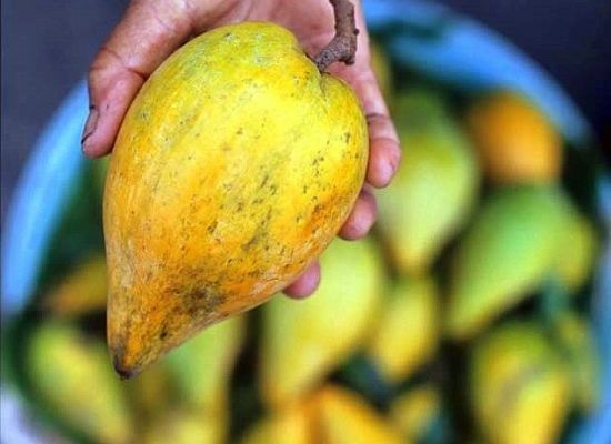 Lucuma (LOO-KU-MA) has been enjoyed for thousands of years for its rich, sweet, maple-like flavor that's said to taste a bit of cashews. And now, raw foodists are loving their lucuma... but why?