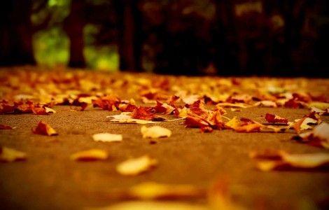 fall season High Resolution HD wallpaper