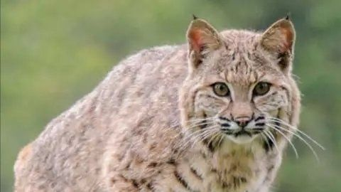 2967 best Big Cat Rescue images on Pinterest | Big cats ...