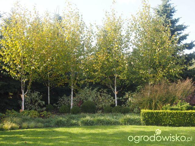 Marzenia i plany vs. rzeczywistość - strona 430 - Forum ogrodnicze - Ogrodowisko