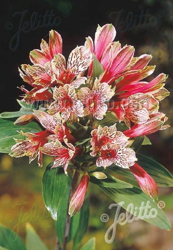Pin On Perennials