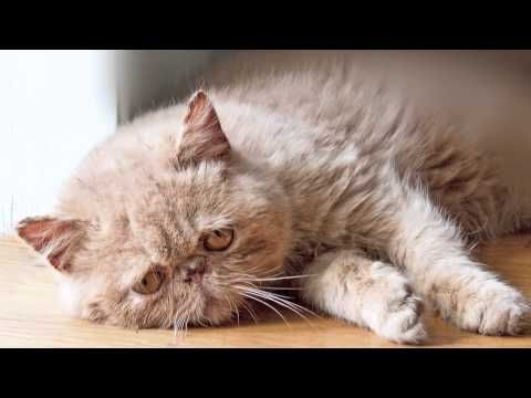 "The ""Sad Cat Diary"" Cats 