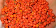 Catina cu miere de albine tratament pentru 33 de boli