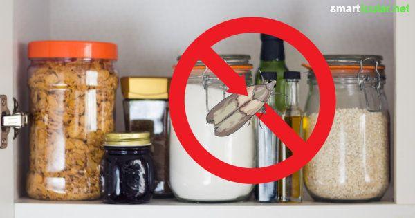 Mottenplage im Küchenschrank? Mit diesen Hausmitteln und Tricks bekämpfst du Lebensmittelmotten langfristig und effektiv.