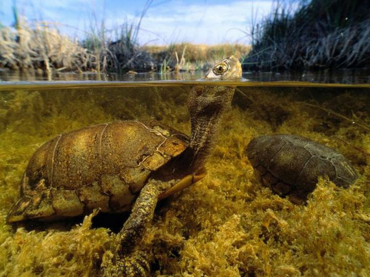 Laguna de los Burros in Mexico - Astonishing Underwater Photography  Best of Web Shrine