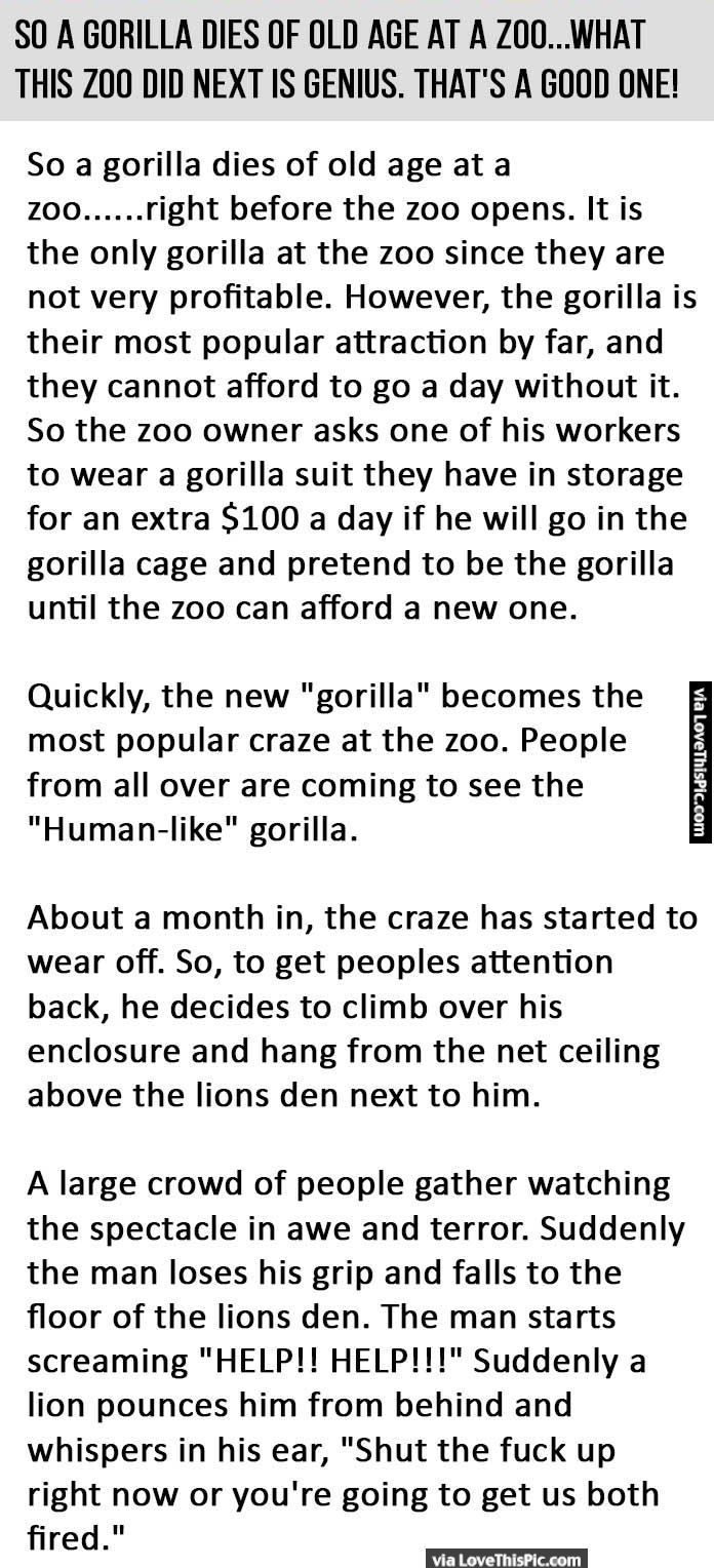 A Gorilla Dies Of Old Age At A Zoo But What This Zoo Did Next Is Genius funny jokes story lol funny quote funny quotes funny sayings joke hilarious humor stories funny jokes best jokes ever best jokes